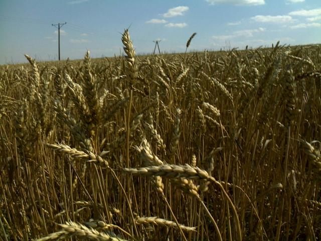 Rolnicy skorzystają na ''Polskim Ładzie''